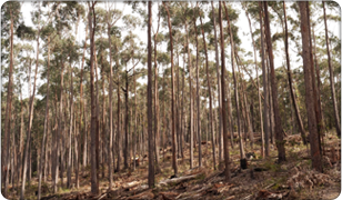Only Supply Sustainable Sourced timber from Australian Forest